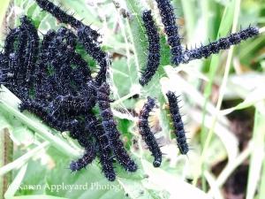 Caterpillars III