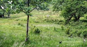 Dozens Of Heath Spotted-orchid, Glen Lochay.